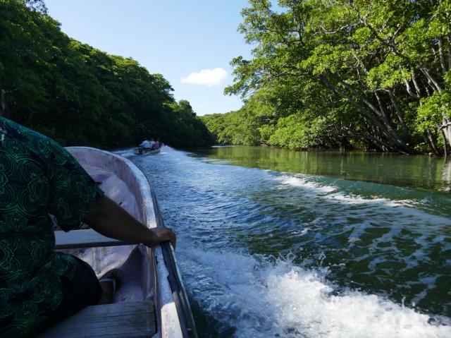 8c fish mangroves
